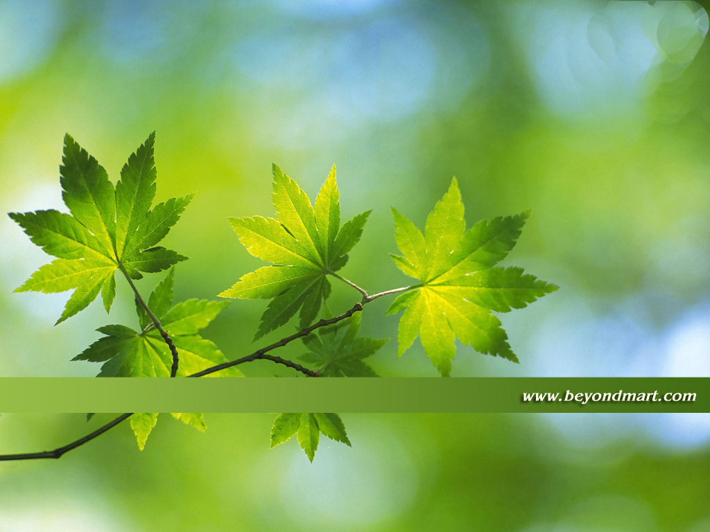 Free Wallpaper Photos wallpapers green leaves